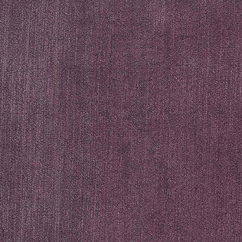 Titan — African Violet